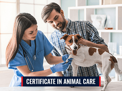 Certificate in Animal Care